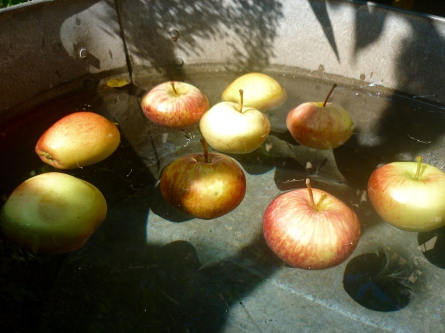 bobbing apples